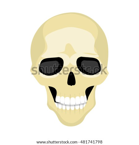 Cartoon isolated human skull on white background. Human skeletone. Symbol of death, pirates and warning.
