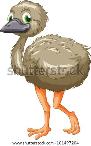 Cartoon of an emu on white - stock vector