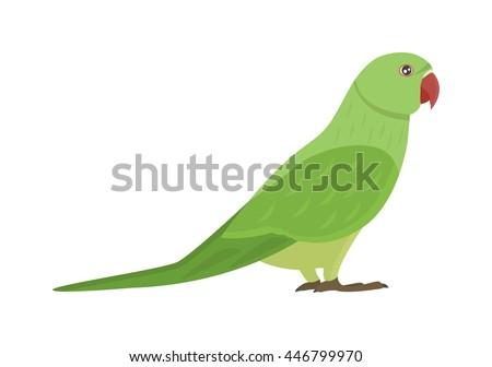 Cartoon parrots bird and parrot wild animal bird. Tropical parrot feather zoo birds tropical fauna macaw flying ara. Various cartoon exotic bird with parrots illustration vector - stock vector