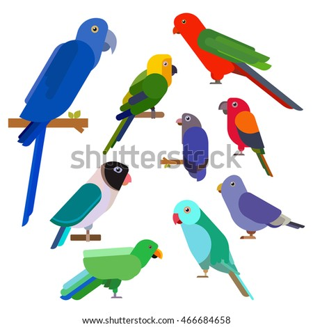 Cartoon parrots collection. Parrot wild animal birds set. Tropical feather zoo birds and tropical fauna macaw flying ara. Various cartoon exotic birds in flat style. Vector illustration eps10.