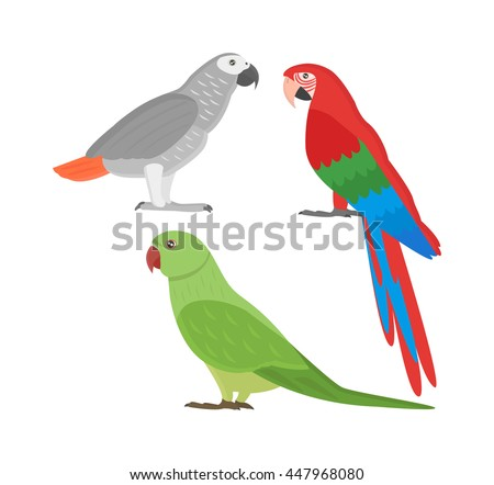 Cartoon parrots set and parrots wild animal birds. Tropical parrots feather zoo birds tropical fauna macaw flying ara. Various cartoon exotic birds set with parrots illustration vector - stock vector