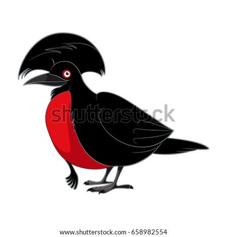Umbrellabird Stock Images, Royalty-Free Images & Vectors ...