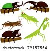 Cartoon Vector of Grasshopper, Beetle, Praying Mantis. A set of cute and colorful icon collection isolated on white background - stock vector