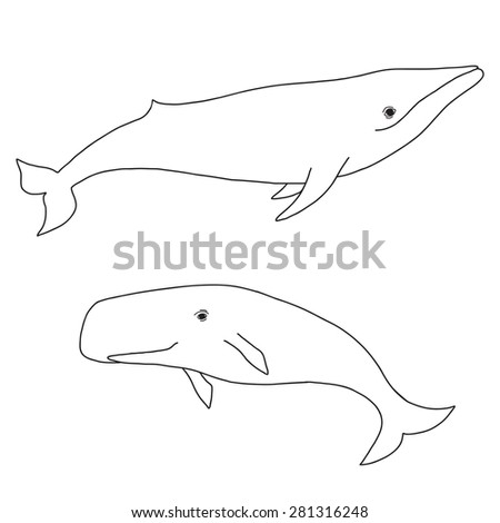 Cartoon vector sea whale and sperm whale. Vector sketch doodle line art. - stock vector