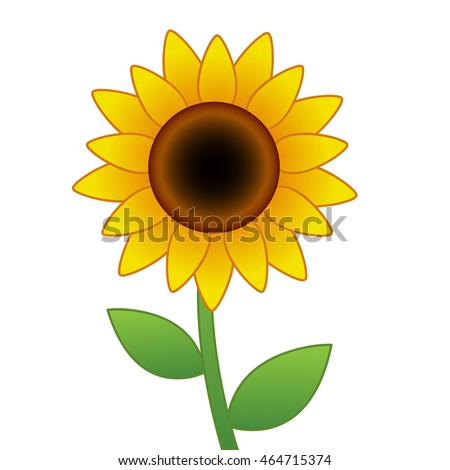 stock vector cartoon vector sunflower isolated on white background 464715374