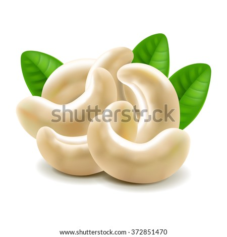 Cashew nuts isolated on white photo-realistic vector illustration - stock vector