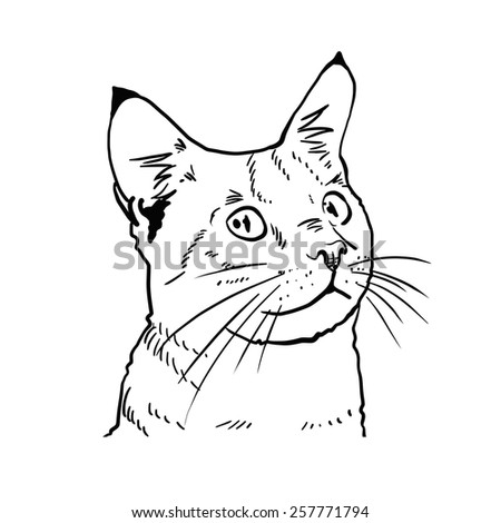 Cat isolated on white background. Vector illustration. - stock vector