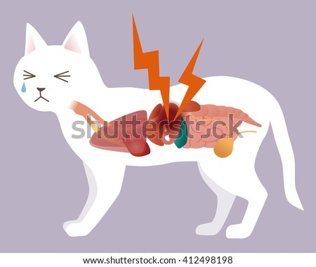 cat's organ and stomachache, vector illustration - stock vector