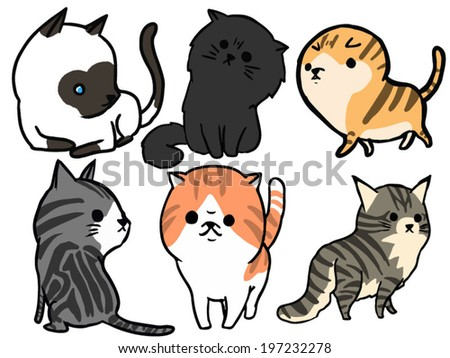 Cat Set 3 Maine coon, American short hair, siamese cat, Persian, Scottish fold,Exotic