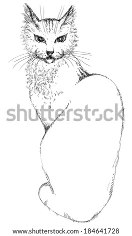 Cat. Vector of young beautiful cat at engraved style - stock vector
