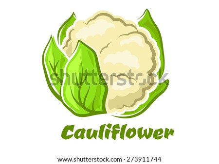 Cauliflower vegetable in cartoon style with cabbage head and fresh green leaves isolated on white background for food or healthy nutrition design - stock vector