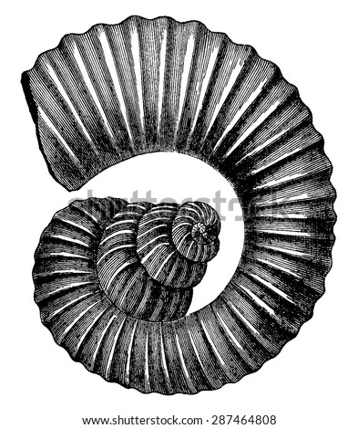 Cephalopod ammonites of the Cretaceous period, vintage engraved illustration. Earth before man - 1886. - stock vector