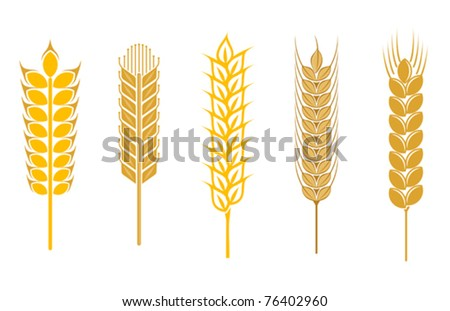 Cereal seeds and symbols isolated on white. Jpeg version also available in gallery - stock vector
