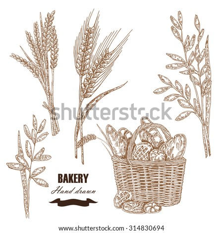 Cereals set. Hand drawn sketch illustration wheat, rye, oats, barley, bread in vintage style. Isolated - stock vector