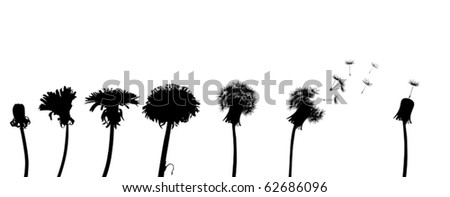 chain of the dandelion flowers on white background - stock vector