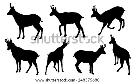 chamois silhouettes on the white background - stock vector
