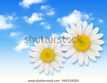 Chamomile flower and blue sky with white clouds, summer flowers backgrounds - stock vector