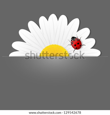 Chamomile flower and ladybird on grey background. Vector illustration. - stock vector