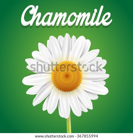 Chamomile flower isolated on green background - stock vector