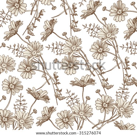 Chamomile. Grass. Wildflowers. Drawing, engraving. Freehand drawing. Beautiful vintage background with blooming realistic flowers. Flora. Herb. Pharmacy.Vector stock Illustration. - stock vector