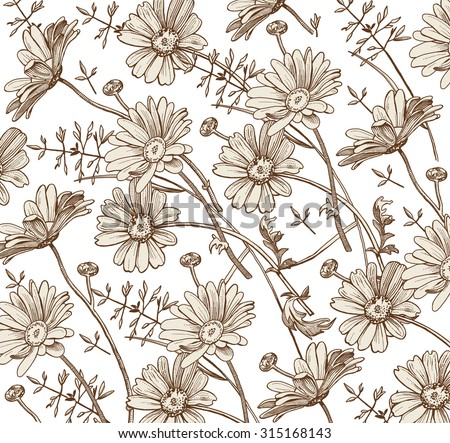 Chamomile isolated. Grass Wildflowers. Drawing engraving. Freehand. Beautiful vintage background with blooming realistic flowers floral Herb. Pharmacy.Vector stock Victorian style Illustration.