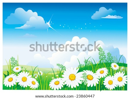 Chamomile on blue sky. Vector illustration