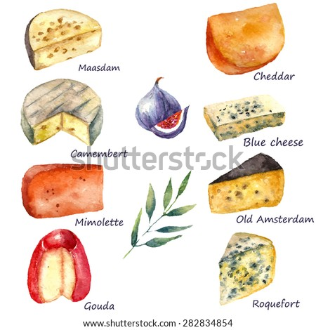 Cheese making various types of cheese set of watercolor illustration on a white background with green twig and figs. Vector. - stock vector