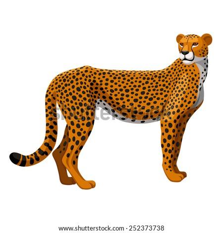 Running cheetah vector - photo#21