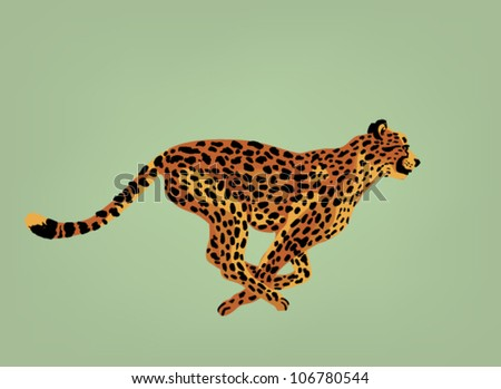 Cheetah  vector - stock vector