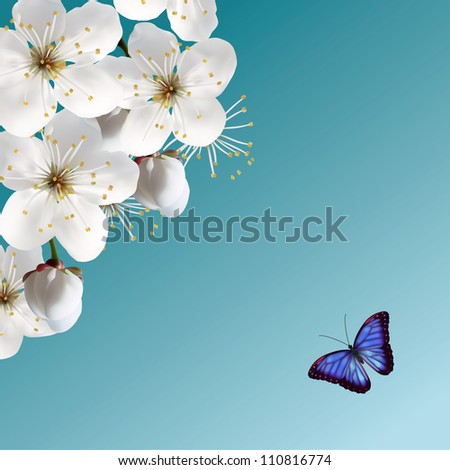 cherry blossom and blue butterfly - stock vector