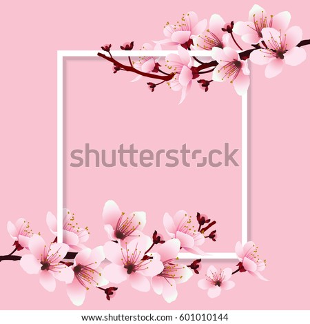Cherry blossom, sakura branch with pink flowers on white frame and sweet pink background. Image of springtime. Vector illustration.