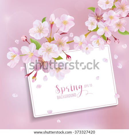 Cherry Blossom Spring Background - with Card for your Text - in vector - stock vector