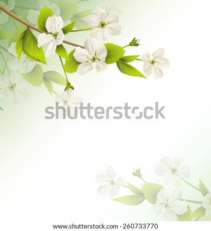 Cherry branch with white flowers on green background - stock vector