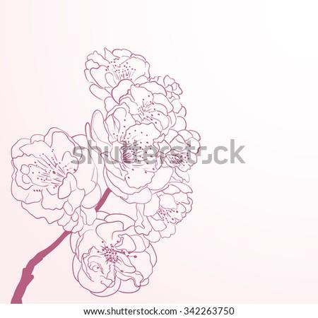cherry flowers in line-art style - stock vector