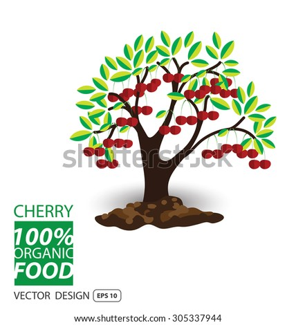 Cherry, fruits vector illustration. - stock vector