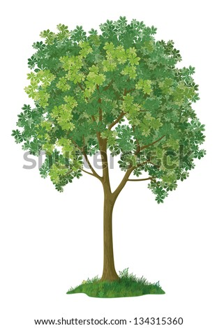 Chestnut green tree, isolated on white background. Eps10, contains transparencies. Vector - stock vector