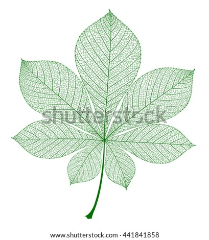 Chestnut leaf isolated. Vector green realistic illustration. - stock vector
