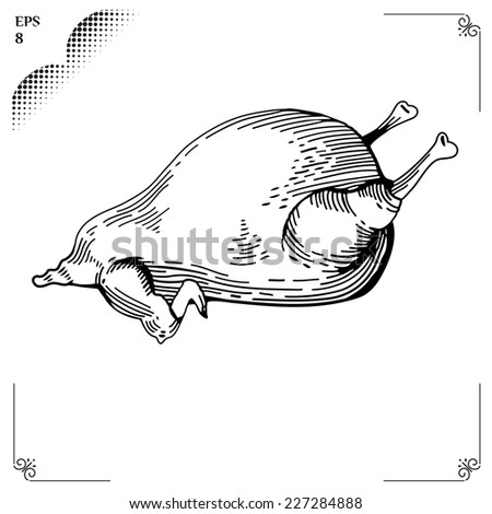 Chicken cartoon illustration. Graphics  picture. Engraving style. Eps 8 - stock vector