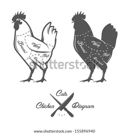 Chicken cuts diagram - stock vector