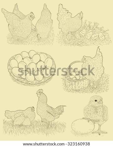 Chicken farm set. Hand drawn illustration in vintage style. - stock vector