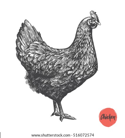 Chicken Stock Images, Royalty-Free Images & Vectors ...