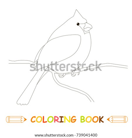 Children Coloring Page Stock Vector Illustration Cardinal Bird For Kids Book