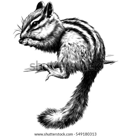 Chipmunk sitting on a branch black and white vector sketch