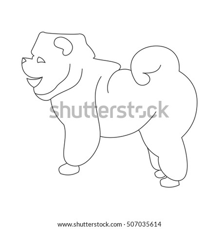 Chow linear dog