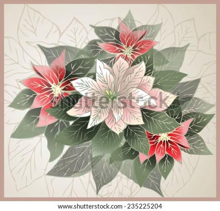 Christmas card.    Illustration Poinsettia flower (christmas star). - stock vector
