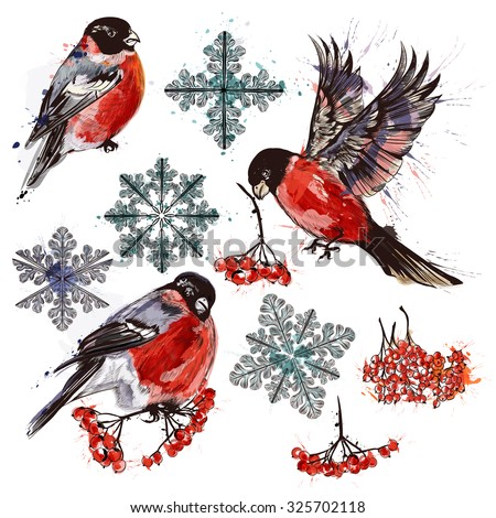 Christmas collection  of bullfinch birds, snowflakes and rowan in watercolor style - stock vector