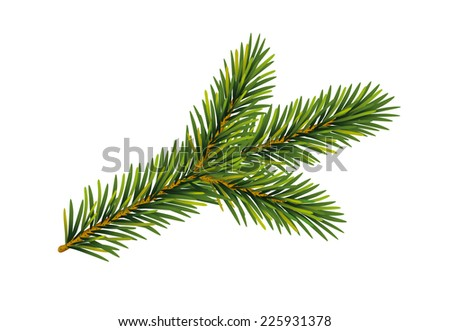 Christmas  fir tree branch, Vector illustration, isolated on white background  - stock vector