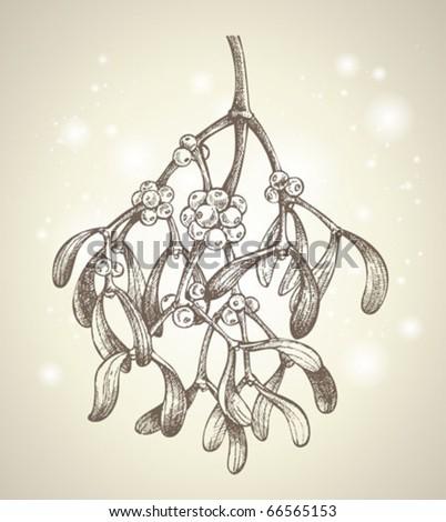 christmas mistletoe branch drawing - stock vector