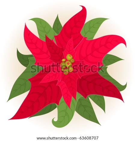 Christmas star. Vector. - stock vector