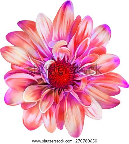 chrysanthemum flower, Spring flower.Isolated on white background. Vector golden-daisy - stock vector
